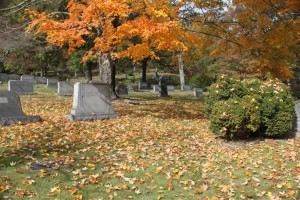 Cemetery Leaves
