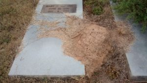 fire_ants_cemetery
